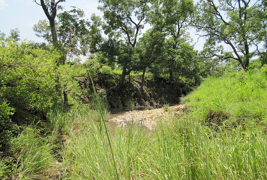 Wet season stream
